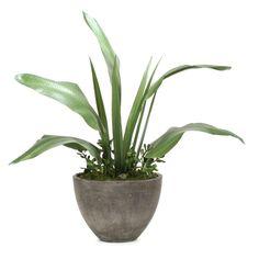 Distinctive Designs Banana Leaves and Jade Plant Silk Plant - 1965A