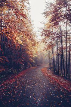 { autumn petals }