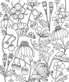 Just Add Color: Botanicals: 30 Original Illustrations To Color, Customize, and Hang: Lisa Congdon: 9781631590290: Books - Amazon.ca