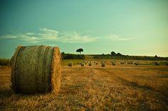 Gravina in Puglia - Estate 1968 by Barbagli, via Flickr