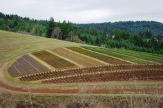 Emilia Hazelip y la agricultura sinérgica #huerto