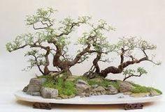 Resultado de imagem para paisagens em bandeja de bonsai