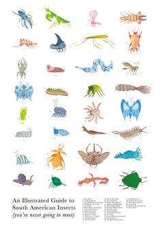 An illustrated guide to South American Insects (you're never going to meet) by Tom Hubmann