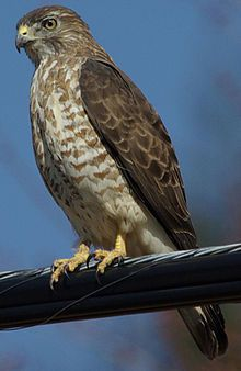 "I was also drawn to the hawk, which represents power, communication/messages, and magic. Every time we made fake Indian names I chose ""Princess EagleHawk,"" lol."