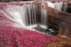 Cano Cristales in Serrania de la Macarena, Columbia (you have to go between September and November to see it in this color)