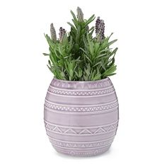With this easy, organic grow kit, you can grow beautiful, wonderfully aromatic lavender flowers at home.