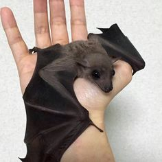 Please let me rescue a bat Lord,I've saved about eve.rything else,but how I adore bats...