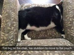 Funny Animal Pictures Of The Day - 27 Pics http://ibeebz.com