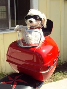 DIY Idee: Koffer gerestyled als hondentransport.....vergeet alleen geen riem/ tuig bevestiging!