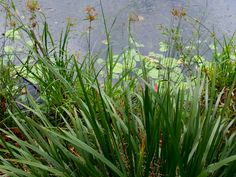 View of lakeside grasses by Natalie Hitoun Photography
