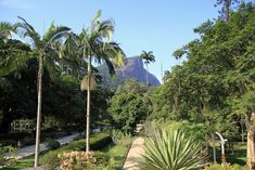 Located at theJardim Botânicodistrict, the gardens are home toaround 6,500 species. The gardens werefounded in 1808 and opened to the public in 1822.The 140-hectare park lies at the foot of the Corcovado Mountain