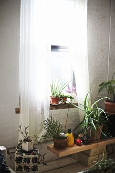 I used to think I had a brown thumb until we moved into our loft. Now we have a jungle - we just added 4 new trees and 5 new plants that we rescued from the artist Hanna Eshel's loft when she moved out after 35 years. Too bad Paul came over to photograph just before that!