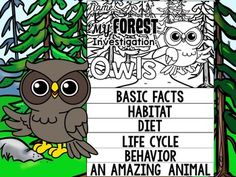 FLIPBOOK Bundle : Owls - Forest Animals : Research, Report, Woodland