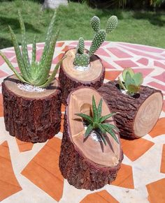 ¡Me encantan estas suculentas macetas de ramas! Diy Wooden Planters, Log Planter, Wooden Diy, Planter Ideas, Tree Planters, Design Jardin, Garden Design, Cacti And Succulents, Planting Succulents
