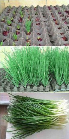 Most Creative Gardening Design Ideas - New ideas Vertical Vegetable Gardens, Vegetable Garden Design, Vegetable Gardening, Greenhouse Gardening, Container Gardening, Gardening Tips, Organic Gardening, Texas Gardening, Potager Garden