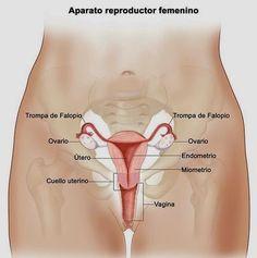TU SALUD: Señales tempranas de cáncer de ovario que no debes...