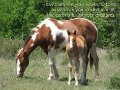 Download Free Christian Wallpaper With Bible Verses: Horses