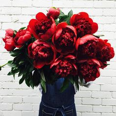 These red peonies have me swooning so hard. Flowers By Brett Matthew John ( My Flower, Beautiful Flowers, Plants Are Friends, Red Peonies, No Rain, Floral Arrangements, Planting Flowers, Wedding Flowers, Inspiration