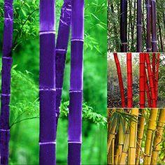 Giant Bamboo, Bamboo Art, Bamboo Plants, Outdoor Plants, Bamboo Landscape, Tropical Landscaping, Landscaping Plants, Tropical Garden, Planting Seeds