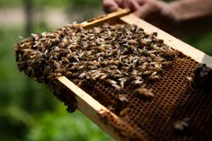 Ag Tech Start-Up Investigates Conditions Inside Commercial Beehives Successful Farming, Faculty And Staff, Indiana University, Science And Technology, Conditioner, Bees, Commercial, Monitor, Club
