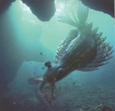Anomalocaris, a carnivorous arthropod from the cambrian. It was the world's earliest super-predator and also the largest creature of its age. It used two long claw-like appendages to grapple and destroy its prey and draw it to its mouth Prehistoric World, Prehistoric Creatures, Walking With Dinosaurs, Dinosaur Fossils, Underwater Creatures, The Good Dinosaur, Extinct Animals, Large Animals, Sea Creatures