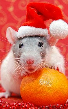 55 Pictures of Funny Animals Cutely Enjoying Christmas Best Picture For Rodents control For Your Taste You are looking for something, and it is going to tell you exactly what Christmas Animals, Christmas Cats, Christmas Humor, Merry Christmas, Animals And Pets, Baby Animals, Funny Animals, Cute Animals, Funny Christmas Pictures