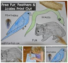 Free Animal classification printable..click on the black and white image to download freebie