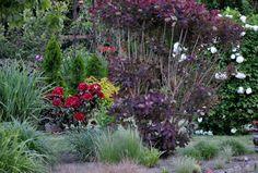 Garden  5/ 015