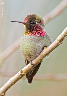 A hummingbird is the sign I picked that God loves me. Every time I see one I can't help but smile :)