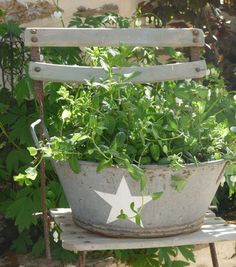 Container Garden: Mint jardin potager (mint, that bad boy, really does need to be contained) Herb Garden, Garden Pots, Vegetable Garden, Chair Planter, Planter Pots, Rustic Gardens, Outdoor Gardens, Pot Jardin, Shabby