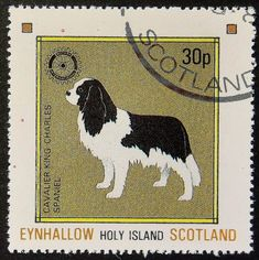 Dog Art Head Study Portrait Postage Stamp MINIATURE SCHNAUZER Togo 1999 MNH