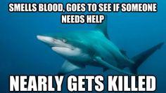 The misunderstood shark II