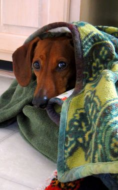 A blog about a happy go lucky little dachshund named Baxter and sometimes his crafty mom :)