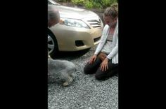 Amazing sweet Video of Dog passing out over seeing her momma after 2 years precious