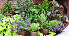 Consejos para la mejor jardinería en macetas y la elección de plantas adecuadas