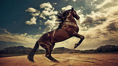 Wild West D Live Wallpaper  Android Apps on Google Play 1024×768 Wild West Wallpapers (39 Wallpapers) | Adorable Wallpapers