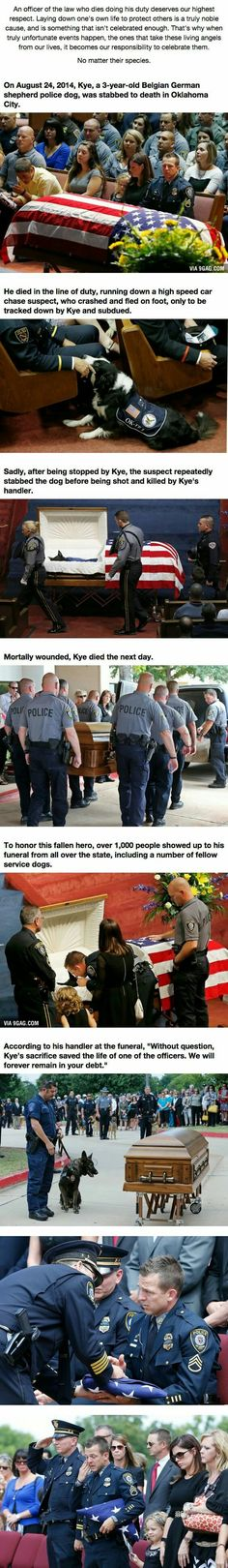 When This Hero Was Laid To Rest, He Was Truly Honored.<<< his handler was given a folded flag. They only give flags to the family of heroes. Think about that the next time you look at a dog. Military Dogs, Police Dogs, I Love Dogs, Puppy Love, Chien Golden Retriever, Animals And Pets, Cute Animals, Animals Planet, Game Mode