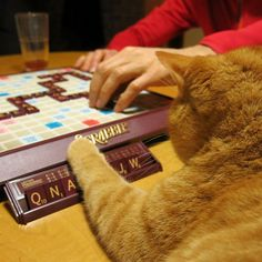 Teddy was a pretty bad Scrabble player.  He frequently buried his tiles to express his displeasure with his selection. I know just how he felt... ~~ Houston Foodlovers Book Club