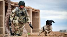 An Army explosives sniffer dog who died hours after his handler was killed in Afghanistan has been given a posthumous award.