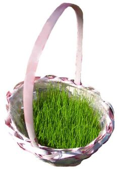 Easter party ideas for adults beautiful 35 diy easter basket ideas how to grow easter basket grass negle Image collections
