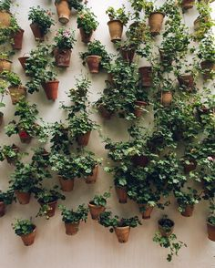 A green wall in Córdoba that we found just before it got all excited and covered itself in red flowers. Foliage forever for us please - may your Sunday be full of greenery too. #HaarkonInSpain