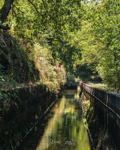 Green stream #portugal #stream #water #path #green #landscape #paisagem #manmade #agua #photography #photographer #fotografo #fotografia