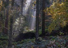 naturenurtures:  (by Guido de Kleijn)