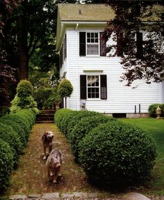 Bunny Williams Connecticut Home   Bunny Williams's Connecticut home   Exteriors & Gardens