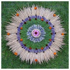 whitney krueger herbal mandala botanical art earth herbs nature cedar wheat