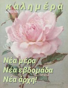 Good Morning, Beautiful, Buen Dia, Bonjour, Good Morning Wishes