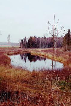 Submission by rita misiuliene. See more of rita's work on Pexels at https://www.pexels.com/u/rita-misiuliene-203648/ #dawn #landscape #nature