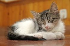 Fun Facts About Purring