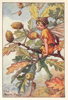 Acron Fairy  Cicely Mary Barker  Memo to self:   Fairies of the flowers and the trees for quilt project.