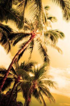 Palm tree, beach, tropical, resort,